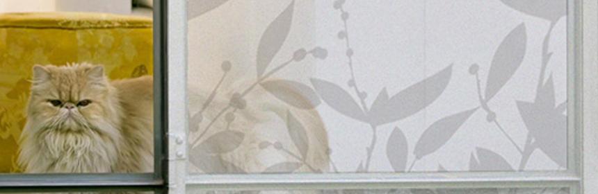 folia na okna dekoria